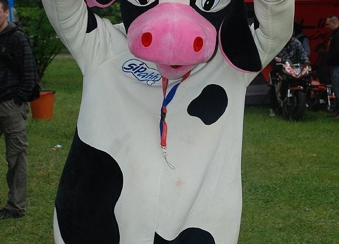 Krowa przebranie