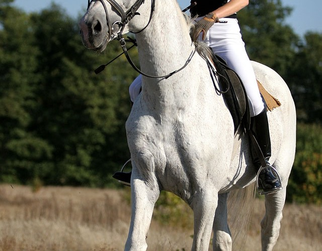 konie i motocykle cz1 08k