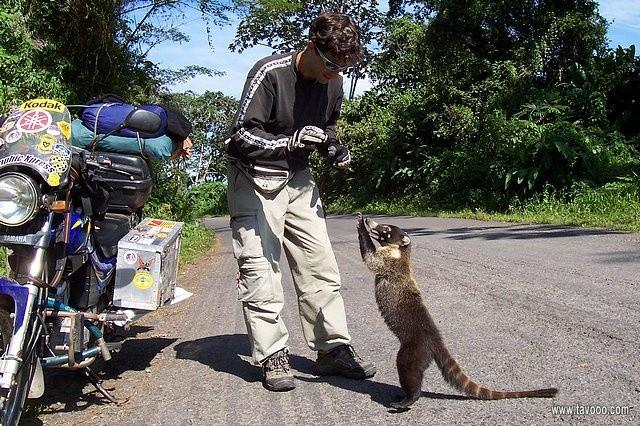 10 Spotkanie z mieszkancem Kostaryki