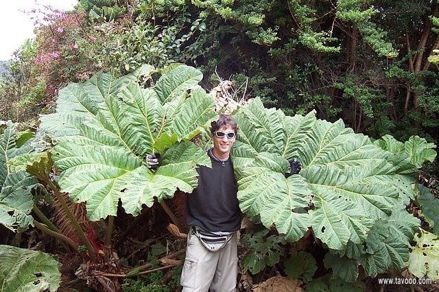 13 Roslinnosc Kostaryki